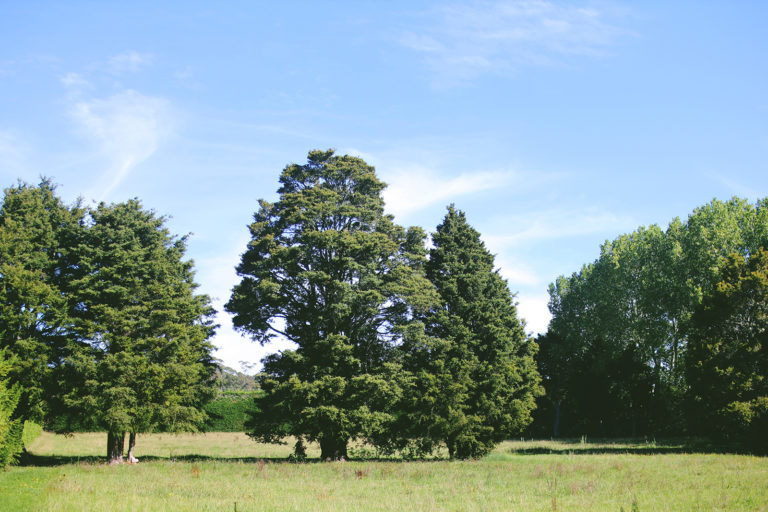 paddock and large trees