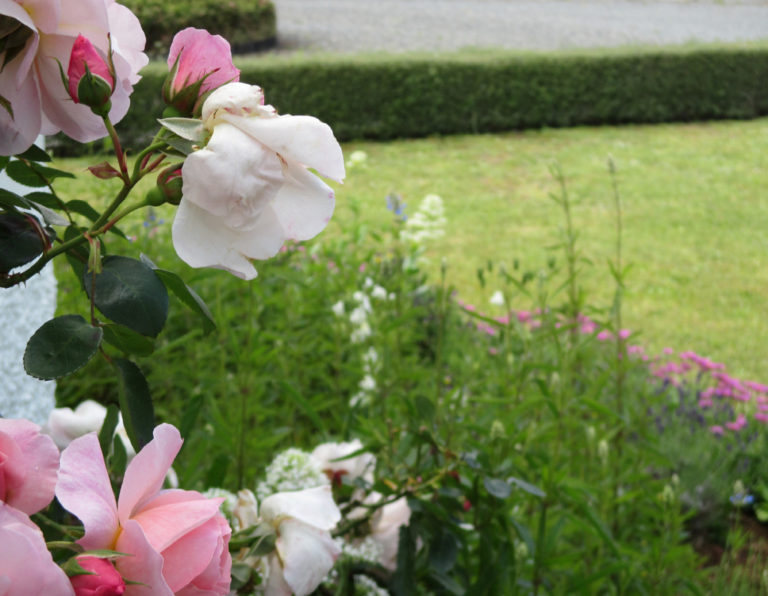 roses and flower borders